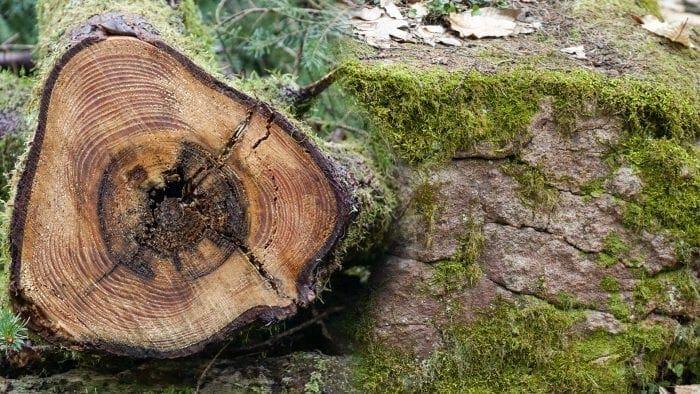 Holz und Stein – gesundes Wohnen